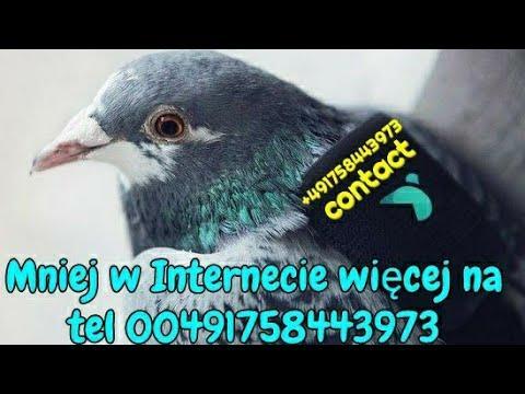 Mniej w Internecie więcej na tel 00491758443973