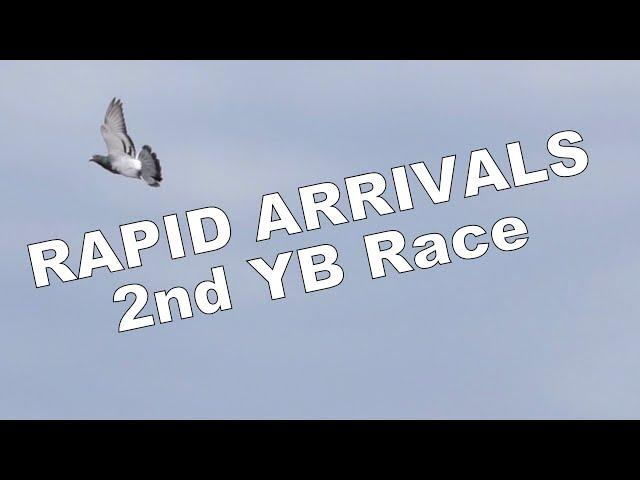 Vlog #103 RAPID ARRIVALS 2nd Youngster Race #HansAndEvertJanEijerkamp