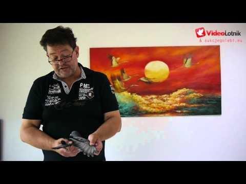 Aukcja gołębi - Jaap Koehoorn