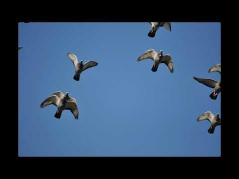 Gołębie w niebie , muzyka relaksacyjna 12
