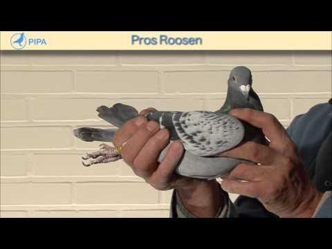 PIPA - Pros Roosen Auction - De Fantast