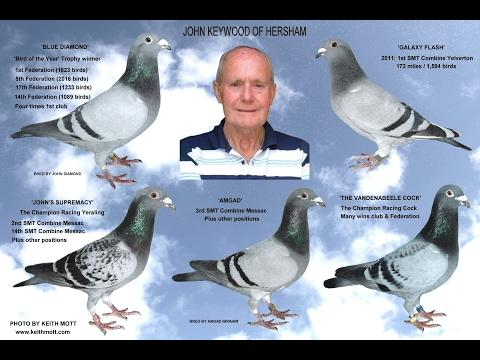Video 351: Great Fanciers, Wonderful Pigeons No.4: Montage Photo Show