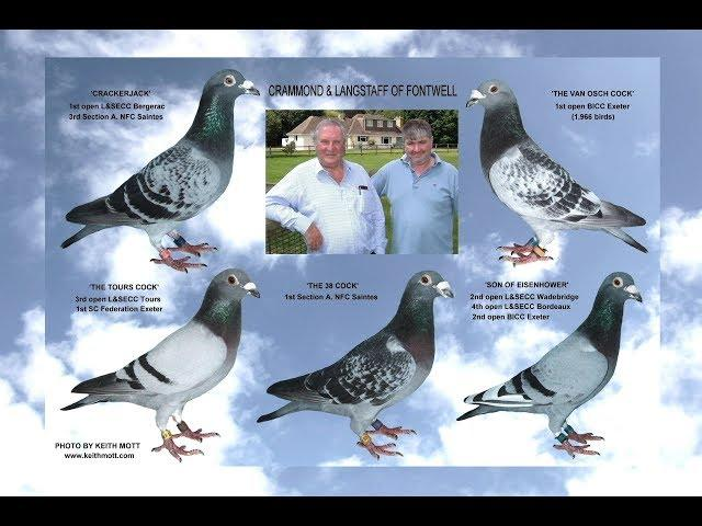 Video 389: Crammond & Langstaff of Fontwell (Part 1): Premier Pigeon Racers