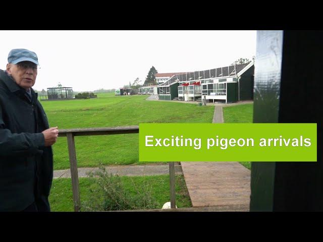 Vlog #32 Exciting racing pigeon arrivals with hail and wind from Niergnies May 4th 2019