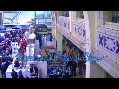 Blackpool Pigeon Show 2014