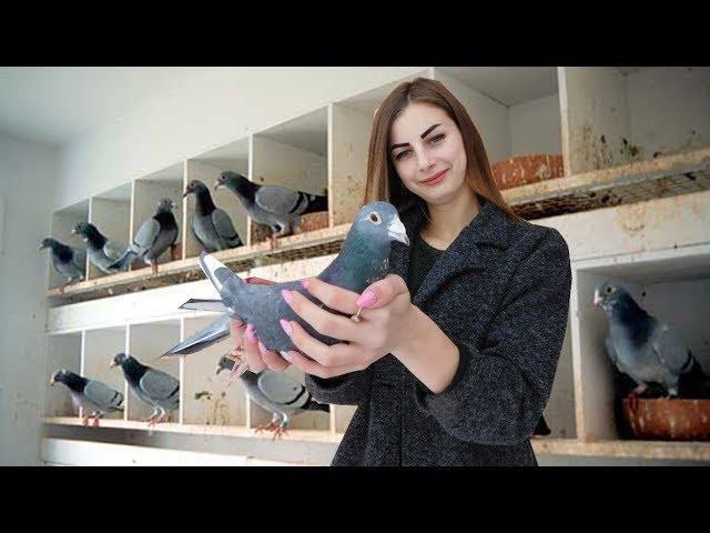 Pigeon Vlogs : Planuri pe viitor
