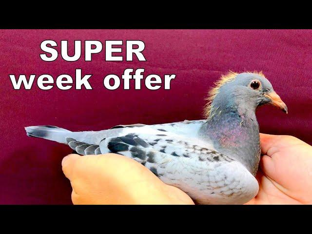 SUPER Week Offer with grandson JACKPOT (SOLD)