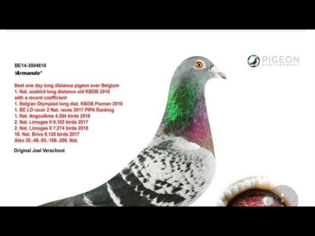 Llegadas de Las palomas de Rafael flores & Luna loft de 300 millas