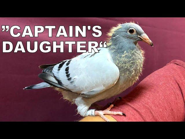 CAPTAIN'S DAUGHTER For Sale