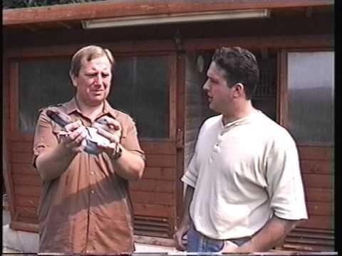 Video 133: Daryll Luxford / Doug Gatland: Premier Pigeon Racers