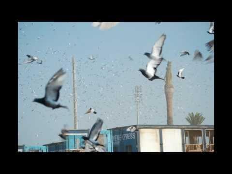 Fotos Barcelona Internactional Pigeon Race 2009 (1)