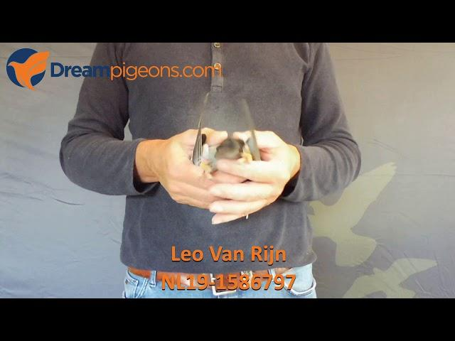 NL19-1586797 Leo Van Rijn Dreampigeons Auction Video