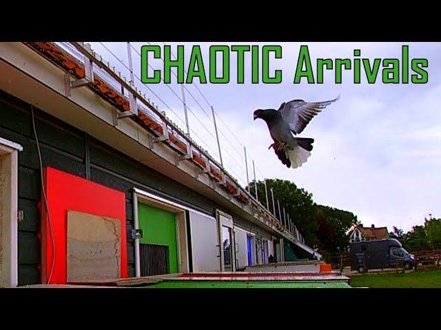 Vlog #60 CHAOTIC Arrivals by Rain and Two Races at the same time