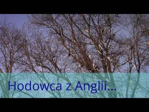 Ryszard i gołębie w niedzielę , odcinek 7/7