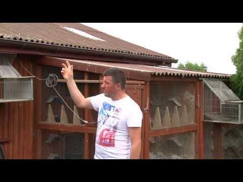 Arkadiusz Toma - prezentacja gołębnika.
