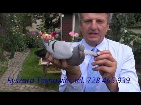 Gołębie dla emerytaTadzia tel. 728 465 939