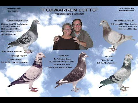 Video 342: Great Fanciers, Wonderful Pigeons 3: Montage Photo Show