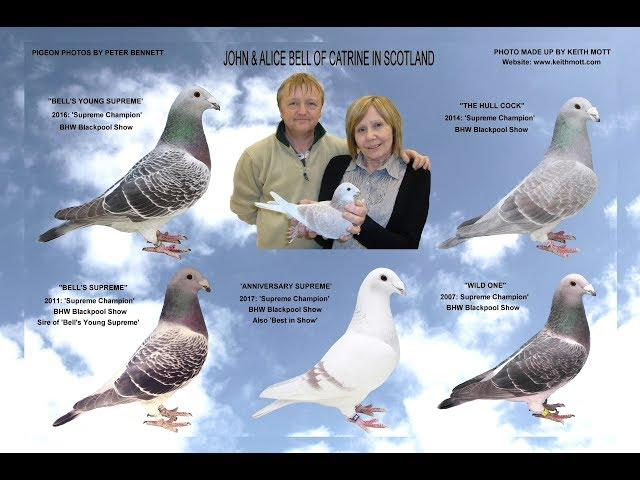"Video 372: ""Pigeon Talk"" with John & Alice Bell of Catrine. Show Pigeons"