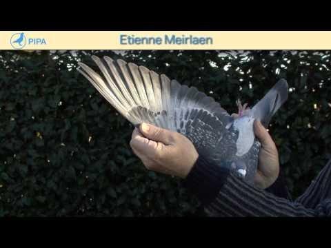 PIPA - Etienne Meirlaen Auction - De Kannibaal