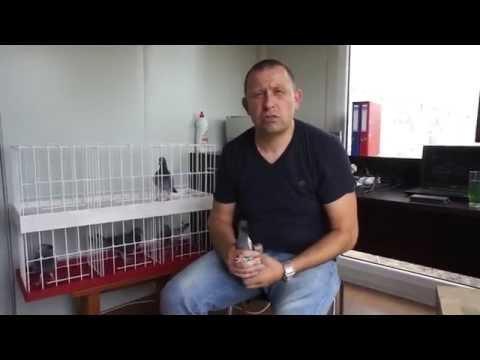 Raimund Suchy - gołębie na sprzedaż - prezentuje G. Nowicki - 15.06.2016r.