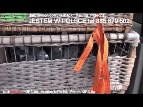JESTEM AKTUALNIE W POLSCE tel. 885 679 502 ZADZWON - CHAMPION KULBACKI BREEDING PRESENTS