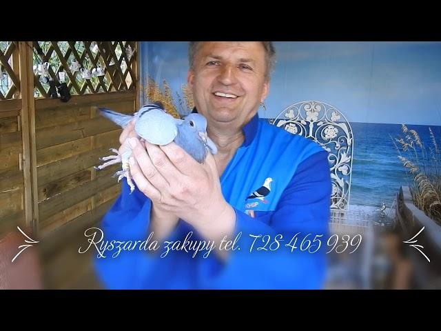 Sensacyjny zakup szybkich gołębi tel . 728 465 939