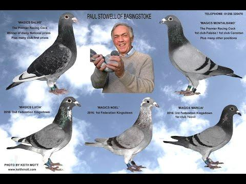 Video 345: Paul Stowell of Basingstoke: Premier Pigeon Racer