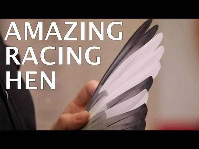 AMAZING RACING HEN Roulette Presented