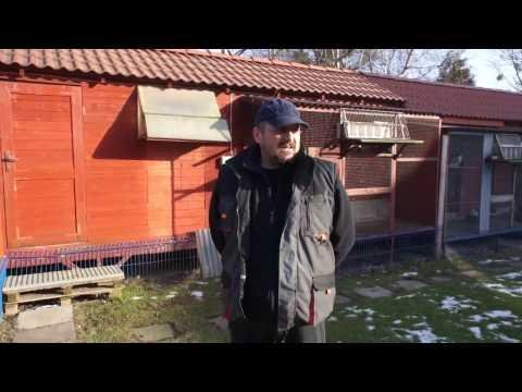 WG Kosakowo - loty zimowe - podsumowanie, gołębie na sprzedaż, itp.