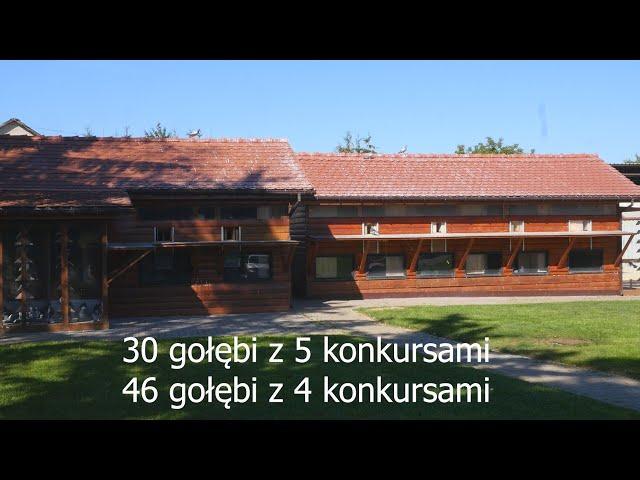 30 gołębi z 5 konkursami, 46 z 4 - Zbigniew Knajp - loty gołębi młodych, PZHGP Szczecin