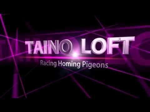 Taino Loft 2018
