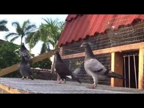 Young Birds Outside Learning How To Fly
