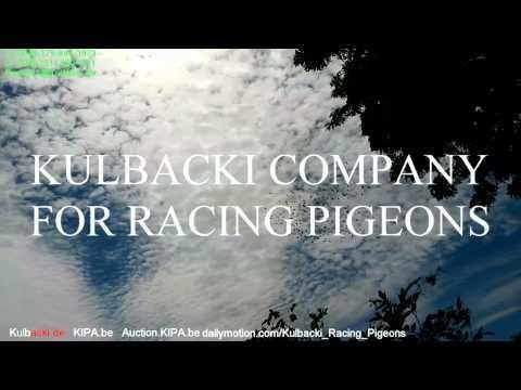 KULBACKI PIGEONS IN KUWAIT CITY 2015 KULBACKI COMPANY FOR PIGEONS RACE WhatsApp 0049-1511-290-1511