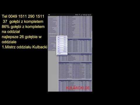 Kulbacki 1. Mistrz Oddziału 2016r. SAUERLAND 26 najlepsze golebie w Oddziale 37 z kompletem 86% 4/4