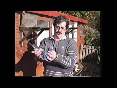 Video 274: Vince & Sue Durrant of Godalming: Premier Pigeon Racers