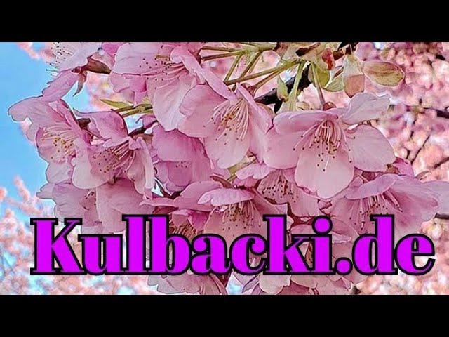 Kulbacki Racing Pigeons 2020, śmietanka 0.2ml / 1l. Wody