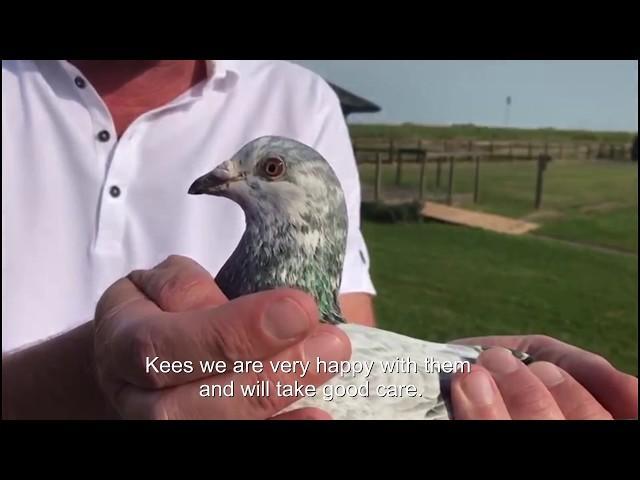 Transfer two top pigeons from Kees van de Beek 2018 06 11