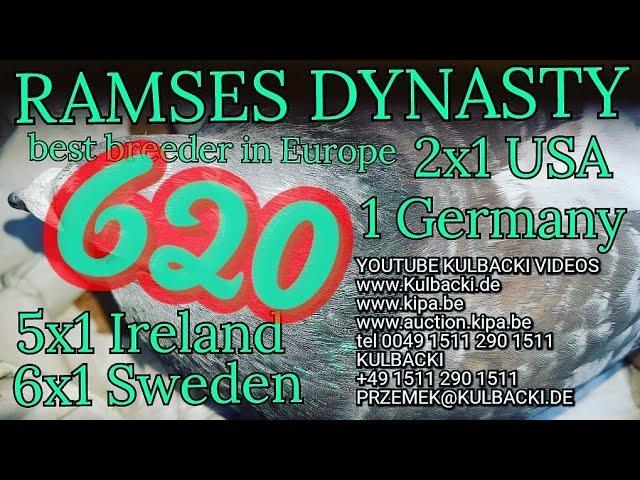 620,ojciec:syn Ramsesa x matka: Janssen vos/lichte(Ramses 14x1. 6x Sweden 5xIrland 2xUSA 1xGermany)