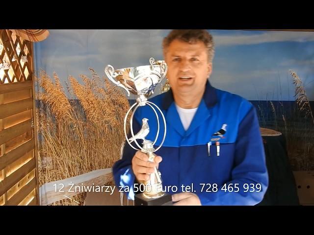 Tajemnicza sprzedaż szybkich gołębi za 500 Euro !