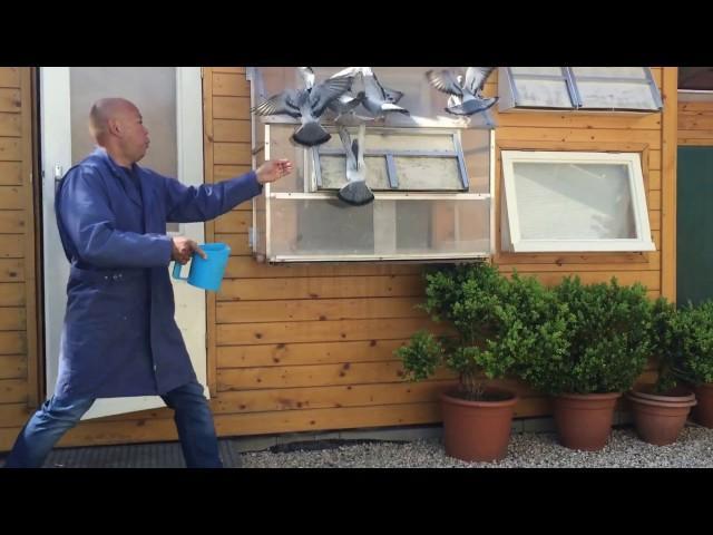 Passion4pigeons-de Jong-Santbergen- Jonge duiven 2016