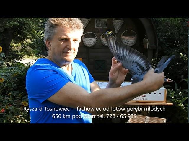 Wkładanie gołębi na lot z Radzymina na 100- lecie Bitwy Warszawskiej .