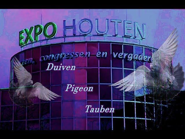 24.  Frühjahrsmesse mit Duiven in Houten 2019
