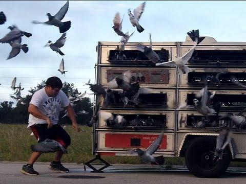 Southwest Florida Pigeon Racing Combine SILVER SPRINGS