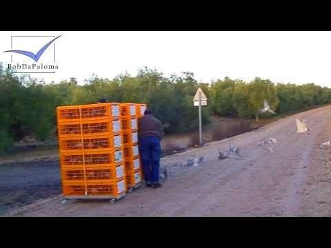 3. Training Toss 10 km with 450 Racing Pigeons by Club Objetivo 1400 (2014)