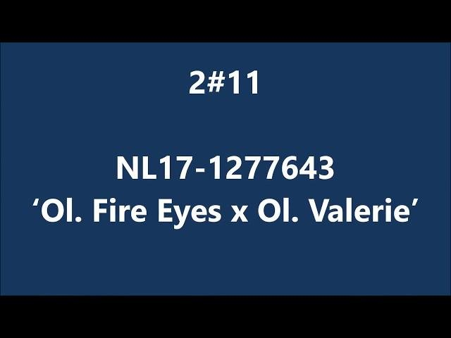 NL17-1277643 Olympic Fire Eyes x Olympic Valerie