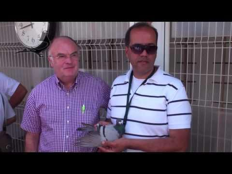SECOND PIGEON ARRIVED - Arona-TENERIFE Race 2010