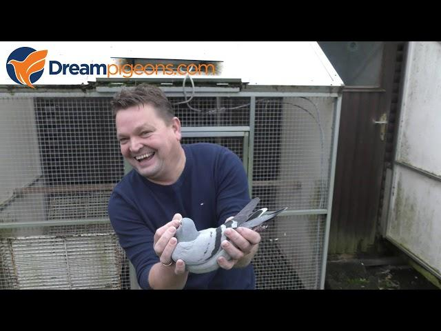 Hilbrands & Zn Dreampigeons Loft Presentation Pigeon Video