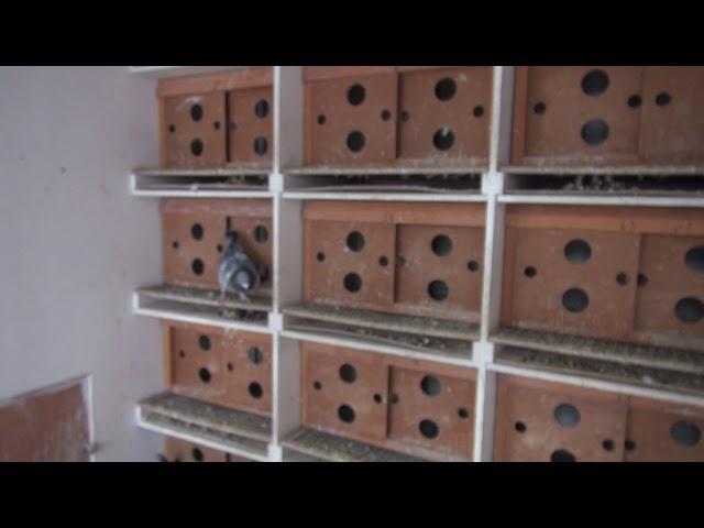 Poštovní holuby - Svoboda Jiří, 1
