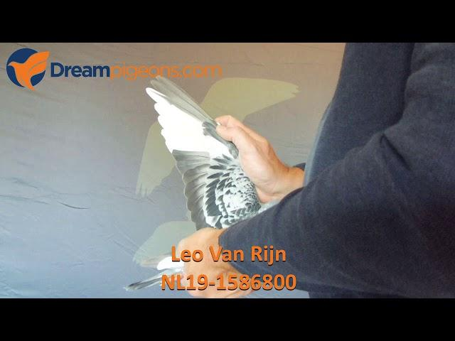 NL19-1586800 Leo Van Rijn Dreampigeons Auction Video