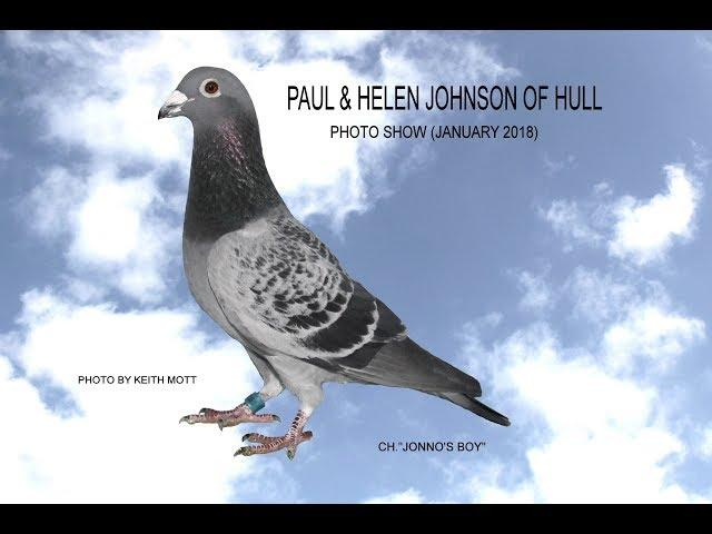 Video 377: Paul & Helen Johnson & Chris Greenwood of Hull: Pigeon Photo Show